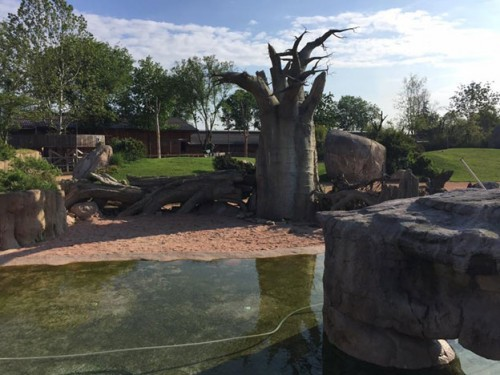 Filling the hippo pool was no problem. The foundation and curved, natural forms of the Malawi Beach habitat are waterproofed with PENETRON ADMIX.
