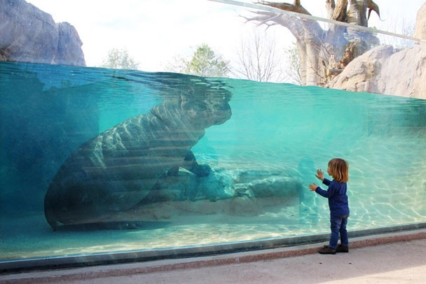 Malawi Beach at Zoom Torino is the first European zoo habitat that brings semi-aquatic animals like the hippo so close to zoo visitors, thanks to PENETRON technology.